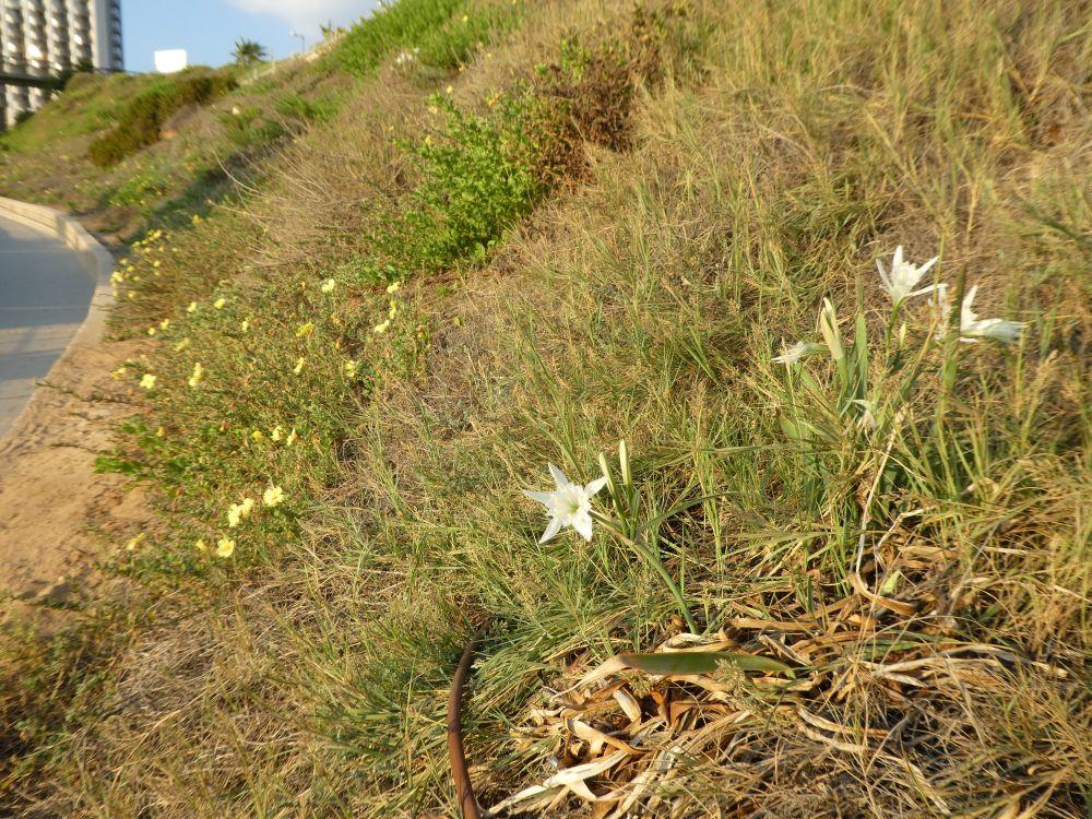 צמחיה עשירה מתבססת על המדרון