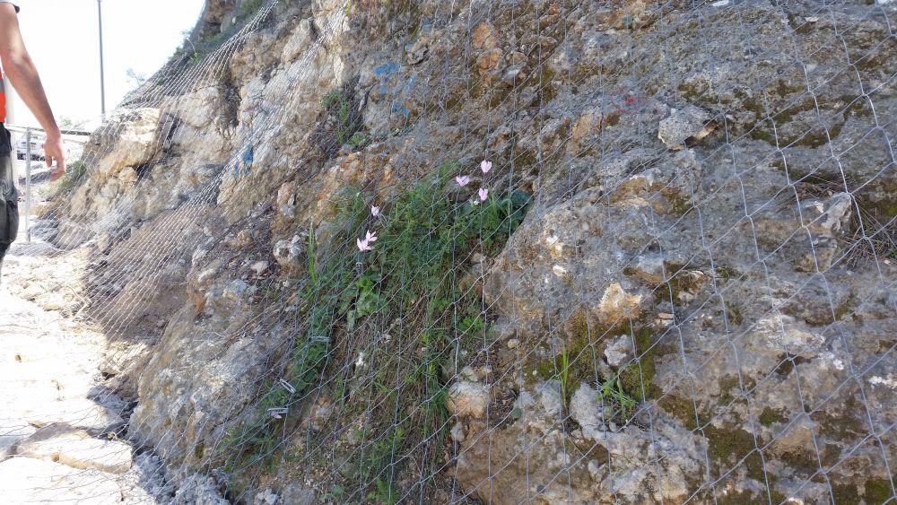 הגנת המדרון מפני דרדרת אבנים
